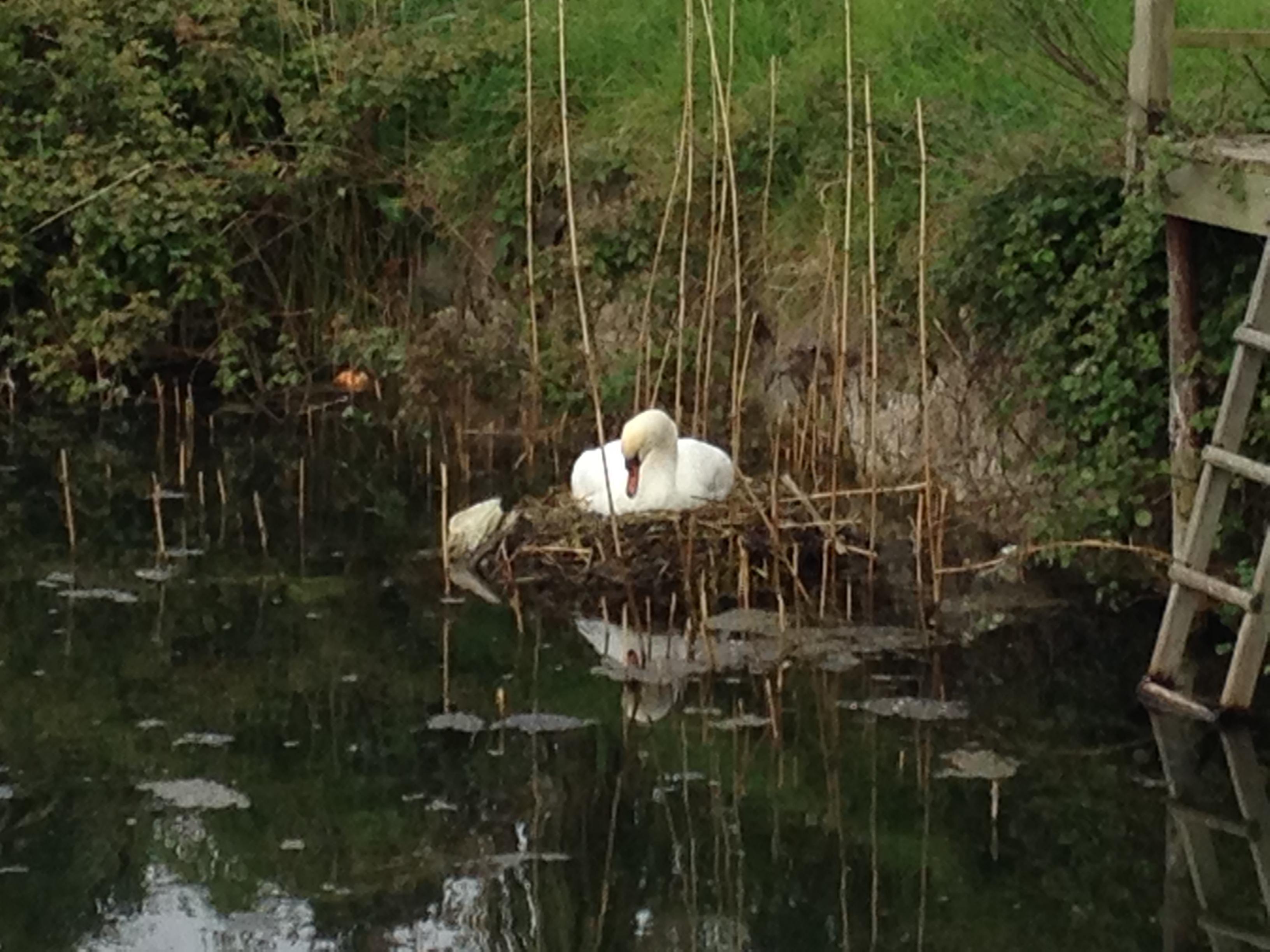 swan vers 2 23 ap 17